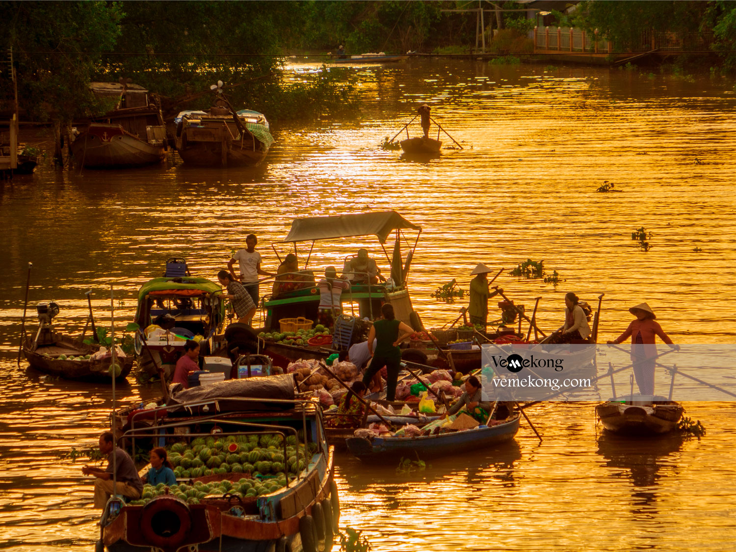 Phong Dien Floating Market - Huge Photographs Collection Online - Can Tho Picture Archive